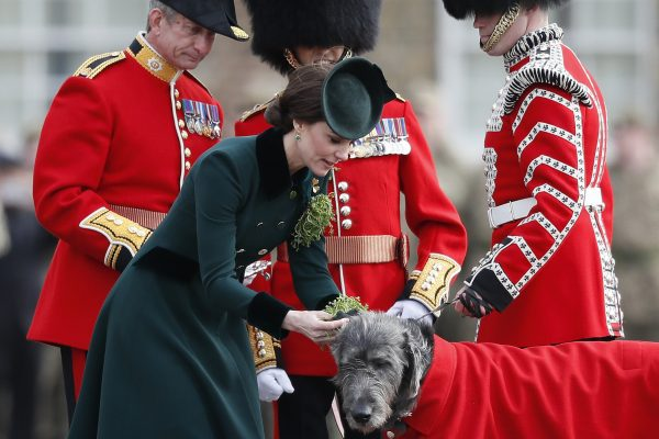 Britain's Kate, The Duchess of Cambridge, presents a shamrock to Domnhall the Irish Wolfhound Mascot, at the St. Patrick's Day Parade at the Cavalry Barracks in Hounslow, London, Friday, March 17, 2017. Their Royal Highnesses visited to present shamrocks to the Officers and Guardsmen of the 1st Battalion Irish Guards