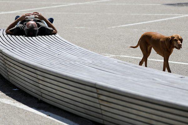 Ein Mann liegt in Bonn in der Sonne.
